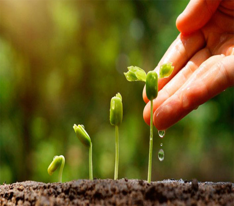 Ambiente favorável para o crescimento