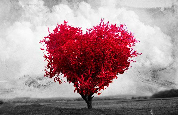 Amor o princípio da comunhão