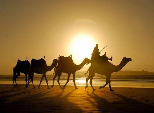 Aprendendo com os camelos