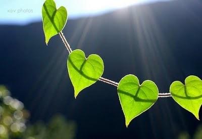 Boa semente, ou mau coração?