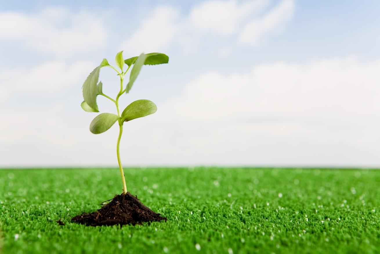 O processo de crescimento espiritual